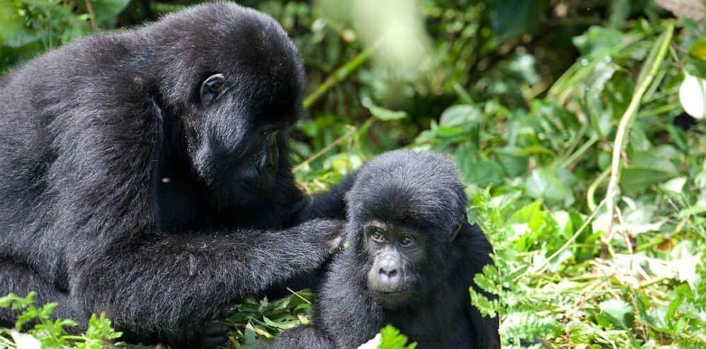 groepsrondreis Uganda
