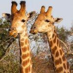 prive safari zuid afrika