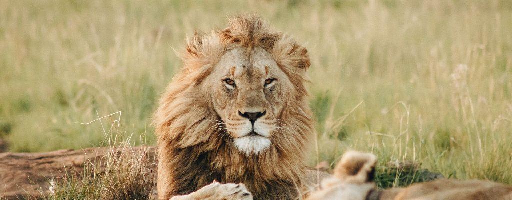 zuidafrika-safari-aanbieding