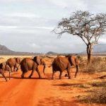 kenia individuele safari