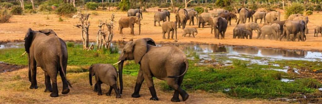 botswana-groepsreizen