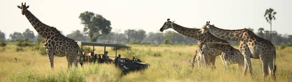 safaribotswana
