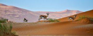 safari-Namibie