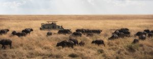 Tanzania-gezinsvakantie